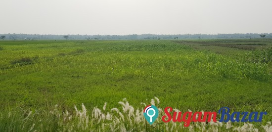 15.8 Katha  land on sale