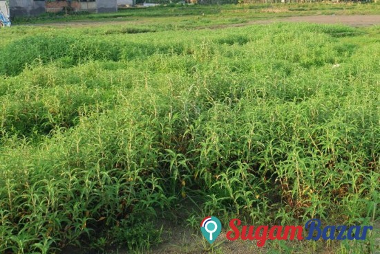Plot for Sale Jalma Hall Narayangarh