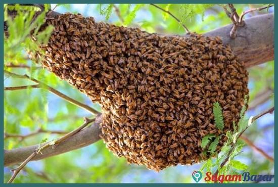 Honey hunting service in Chitwan