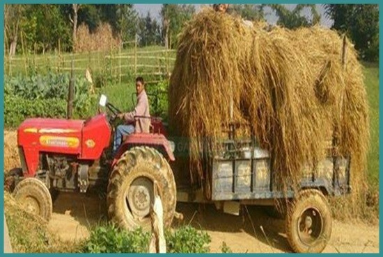 Dry Paddy Straw