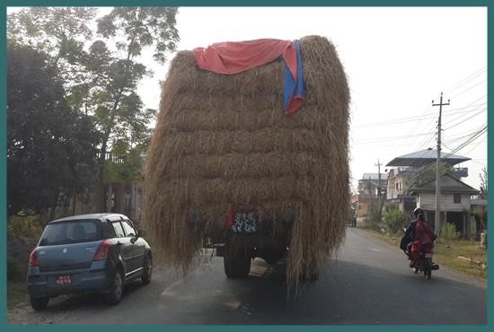 Dry Paddy Straw Buy & Sales