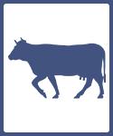 Cow &  Buffalo Farm